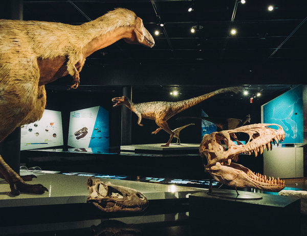 T Museum History Rex Natural