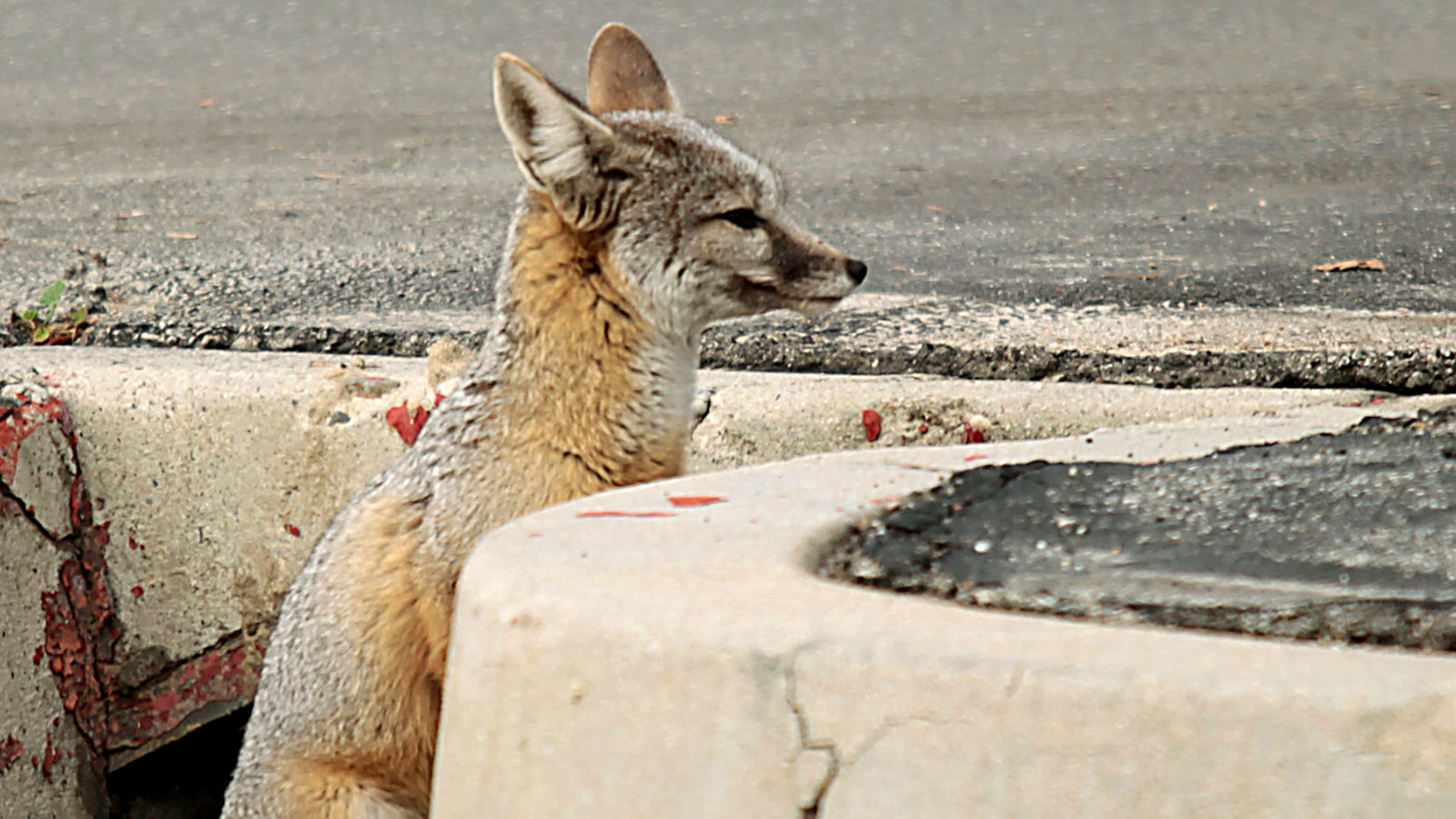 Interior Nominee Intervened To Block Report On Endangered