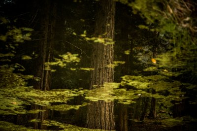 Restoring Forests Could Help Put a Brake on Global Warming, Study Finds