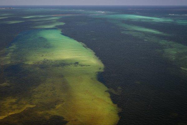 La llegada masiva de sargazo a la costa mexicana está causando una situación crítica en el sureste del país, dijo el contraalmirante Enrique Flores Morado, subdirector general de Oceanografía, Hidrología y Meteorología de la Secretaría de Marina.