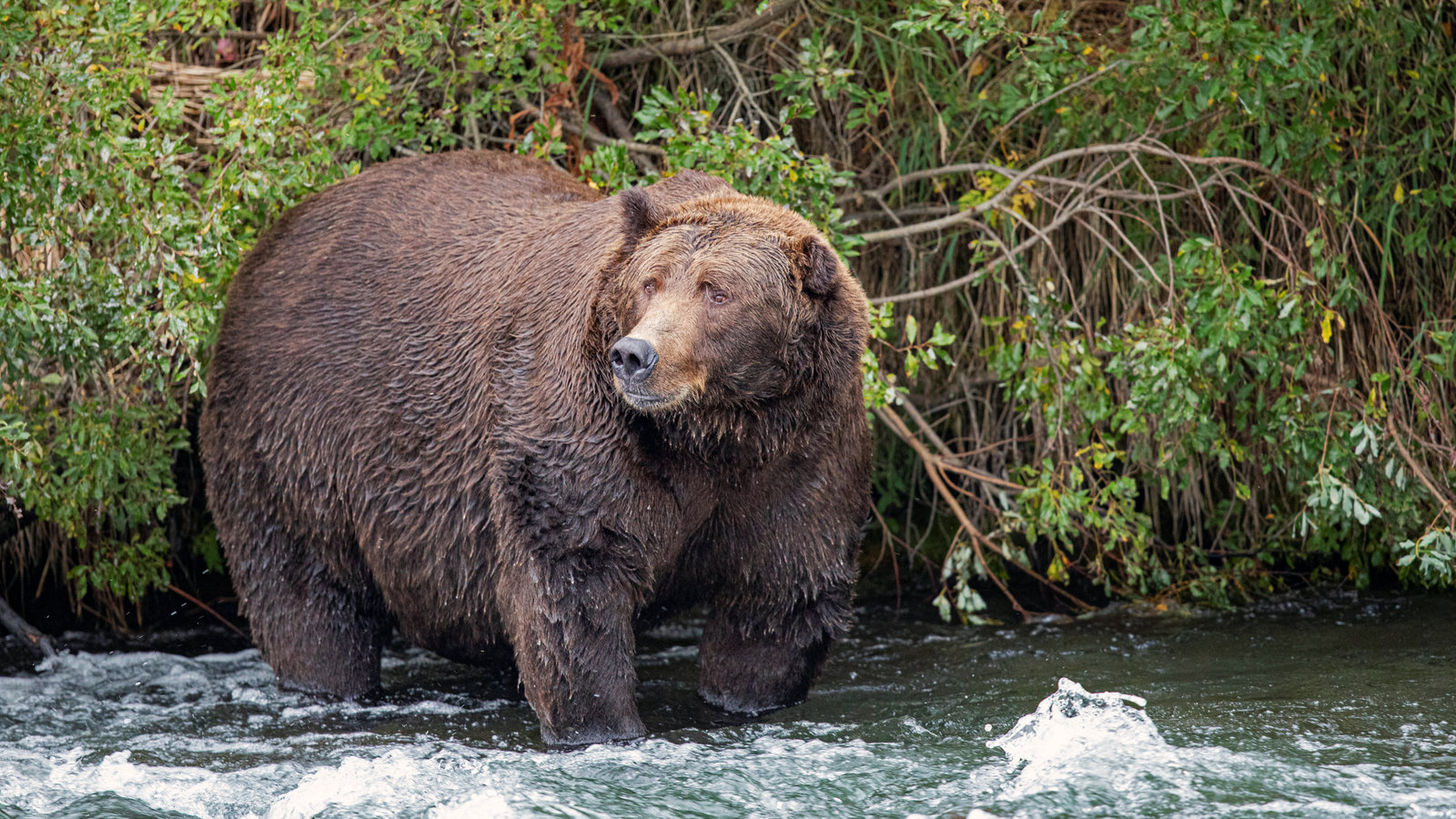 Hibernation Works For Bears Could It Work For Us Too