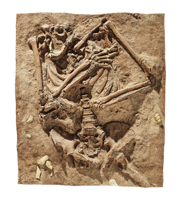 A Neanderthal fossil on view at the Natural History Museum in London. A new genetic analysis revealed traces of Neanderthal DNA in all living humans, including Africans, who were thought to have none.