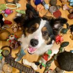 Whisky Knows Her Toys The New York Times