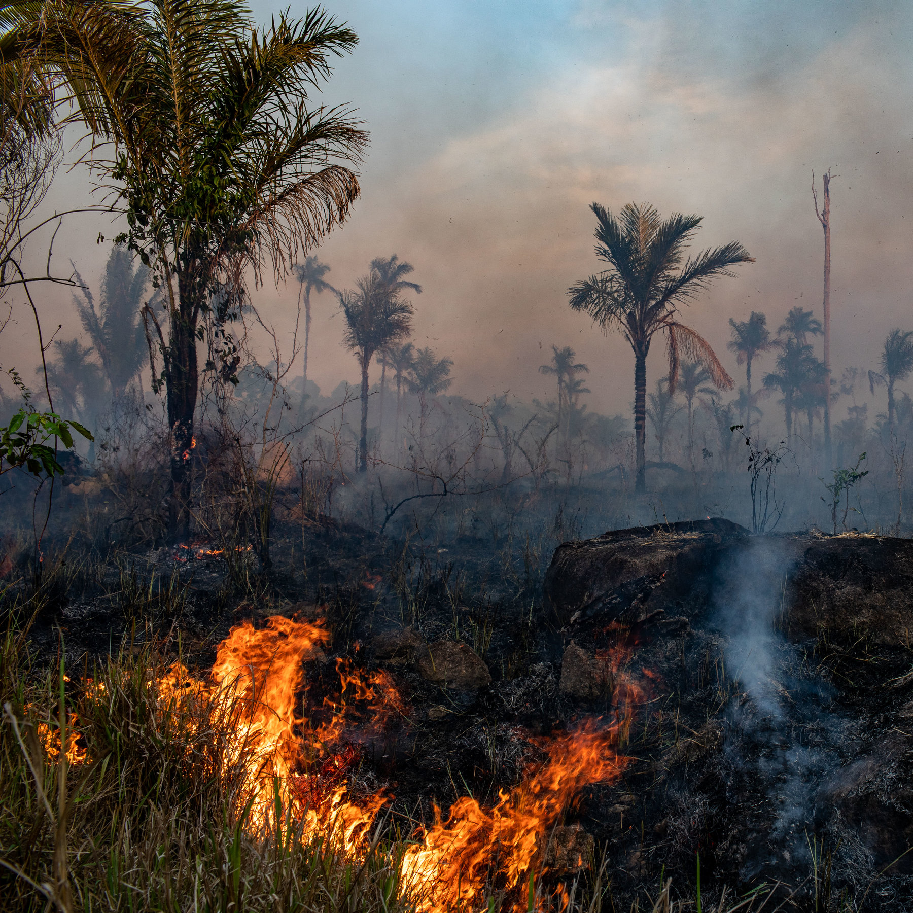 For example, they regulate the water balance of the soil, store the co 2 and are the basis of life for the majority of all. Amazon Deforestation Soars As Pandemic Hobbles Enforcement The New York Times