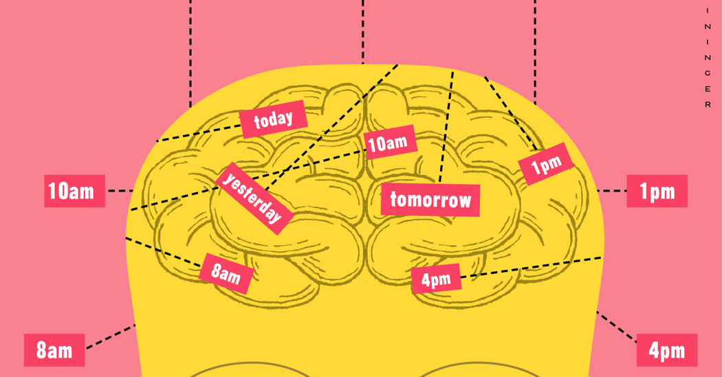 Brain Scientists Explore the How of When