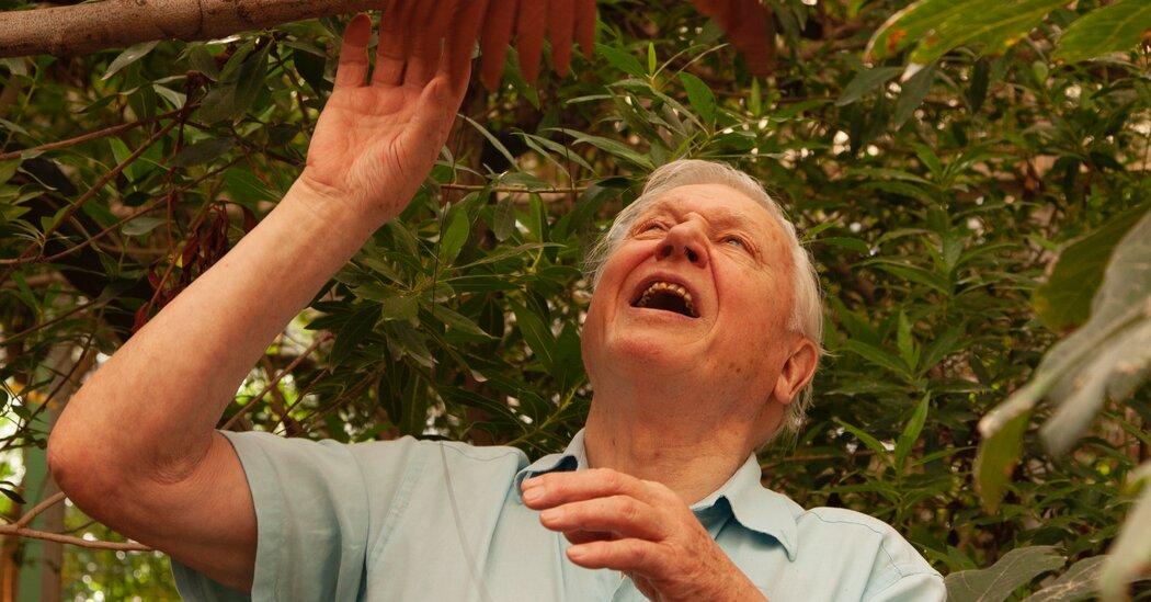 David Attenborough Still Has Hope for Our Future