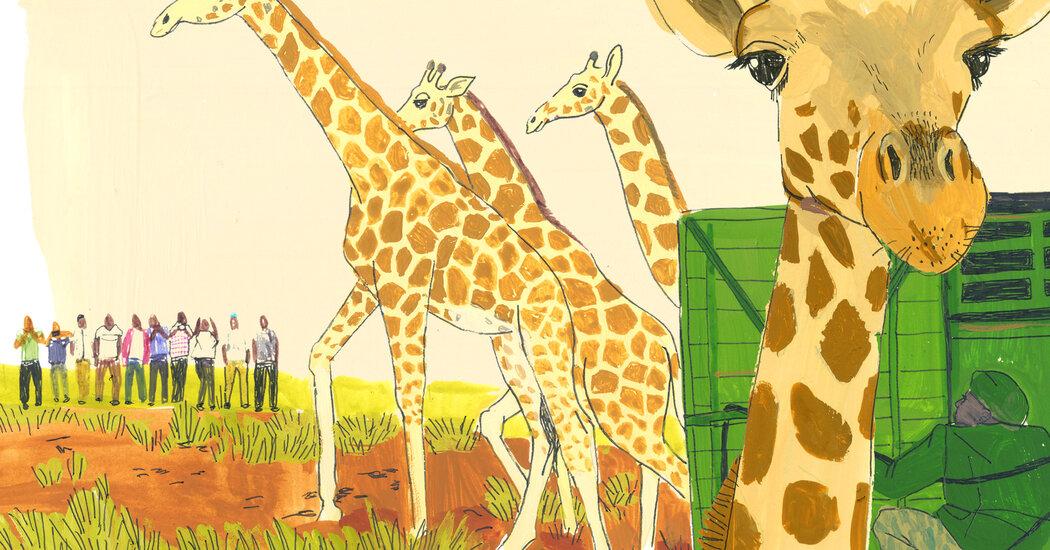 How to Move a Giraffe