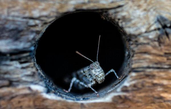 A grasshopper in Vegas.