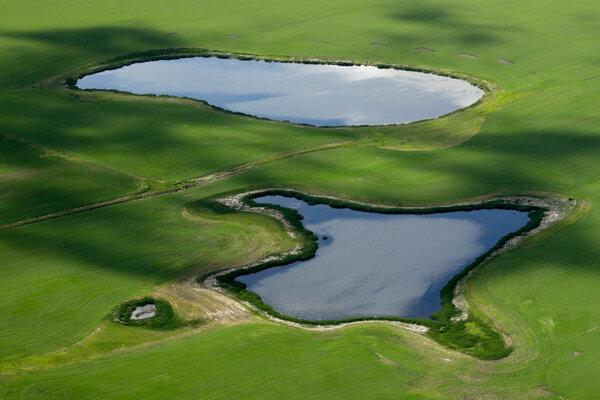 Prairie potholes, a type of ephemeral wetland, dot the landscape in North Dakota.
