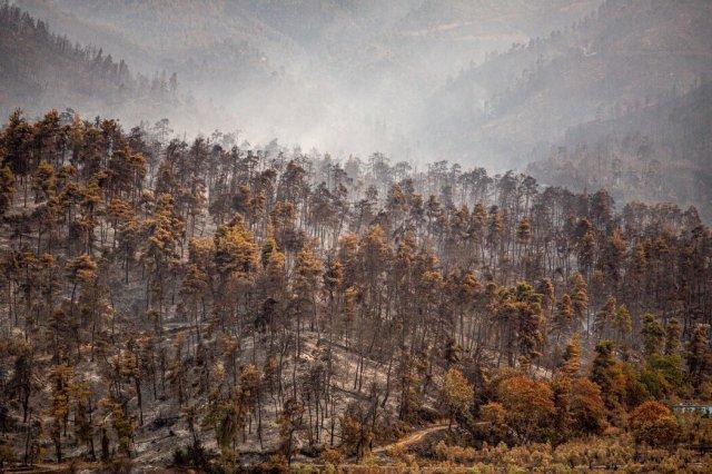 希腊今年夏天的火灾烧毁了数万英亩的森林。