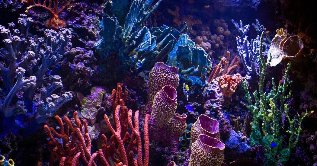 , High-End Design Comes to the Fish Tank, The Habari News New York