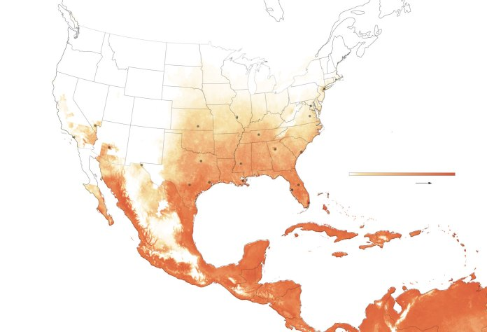 Image result for dengue mexico 2019