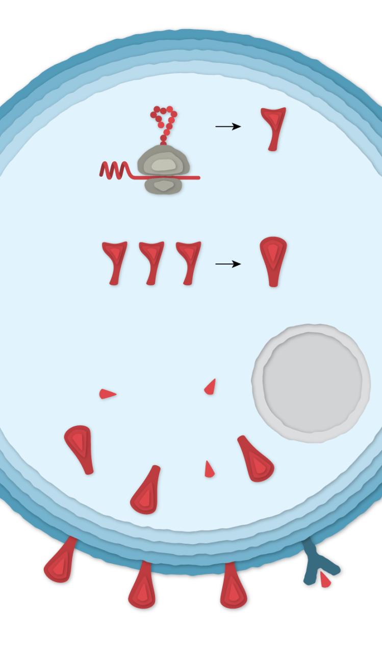4 cell az gamaleya es 414