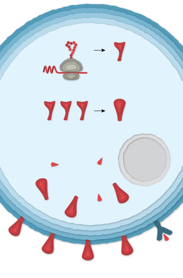 4 cell az gamaleya es 450