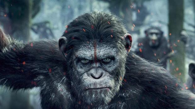 Monos roban sangre con covid19