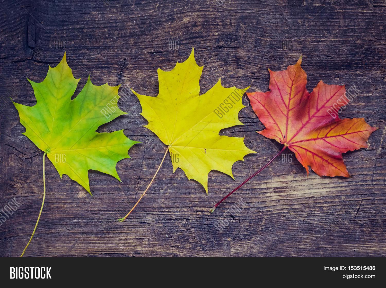 Autumn Leaf Life Cycle Autumn Image Amp Photo