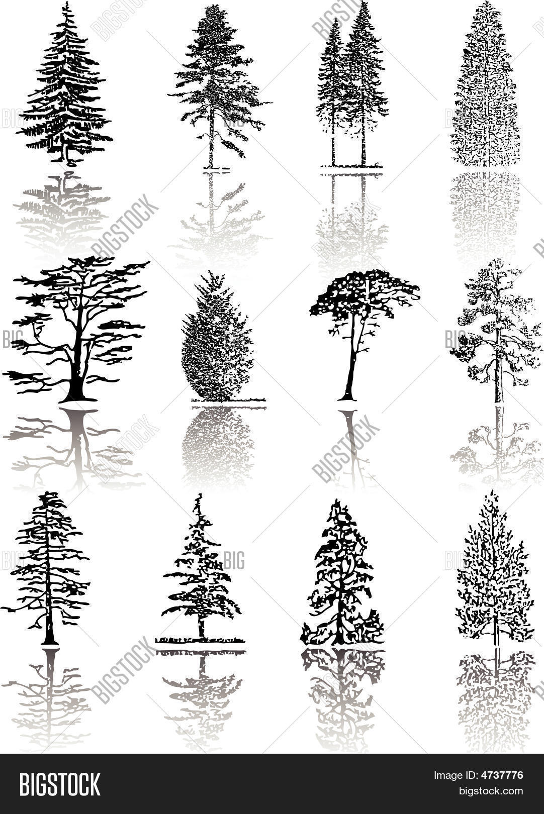 Tree Silhouettes Vector Amp Photo Free Trial