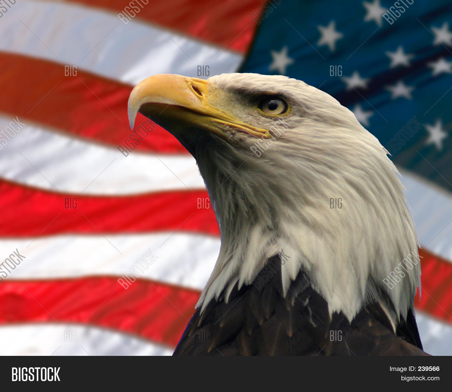 Image result for The American eagle