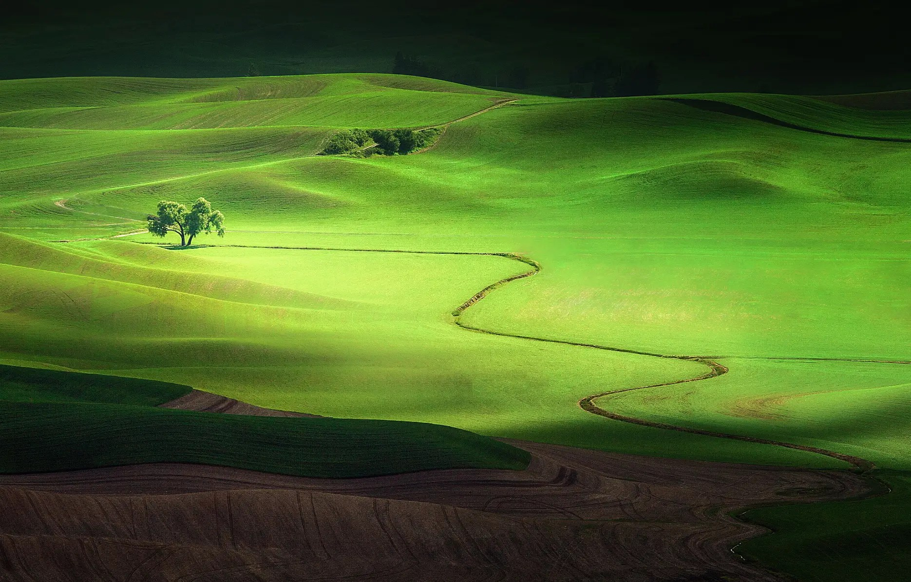 Shadows And Light: A lone tree in the Palouse region of Washington