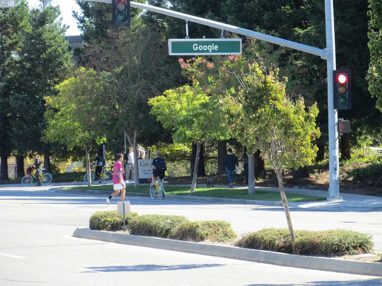 The Google campus is located in a quiet town called Mountain View. Trees are big. Google signs are low to the ground, so the campus almost feels hidden.
