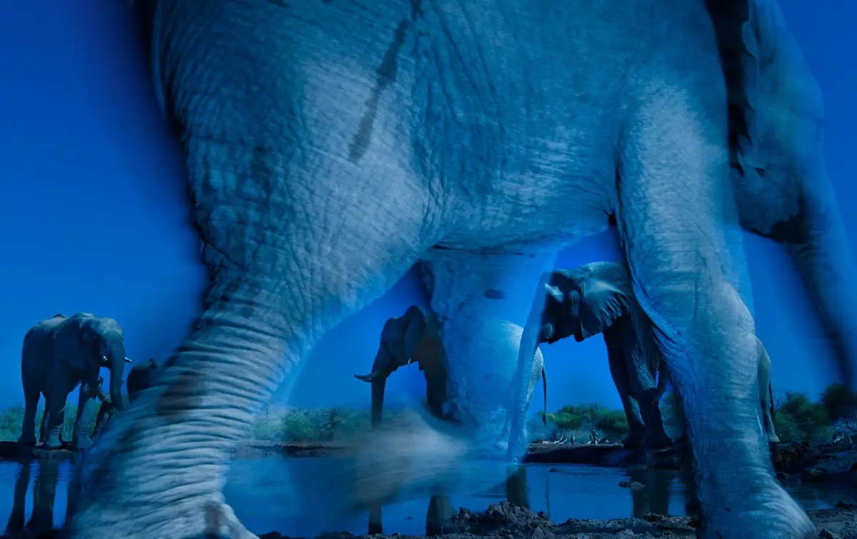 """Essence of Elephants"" — Greg du Toit of South Africa won the Wildlife Photographer of the Year award for this shot of African elephants taken at a waterhole in Botswana's Northern Tuli Game Reserve."