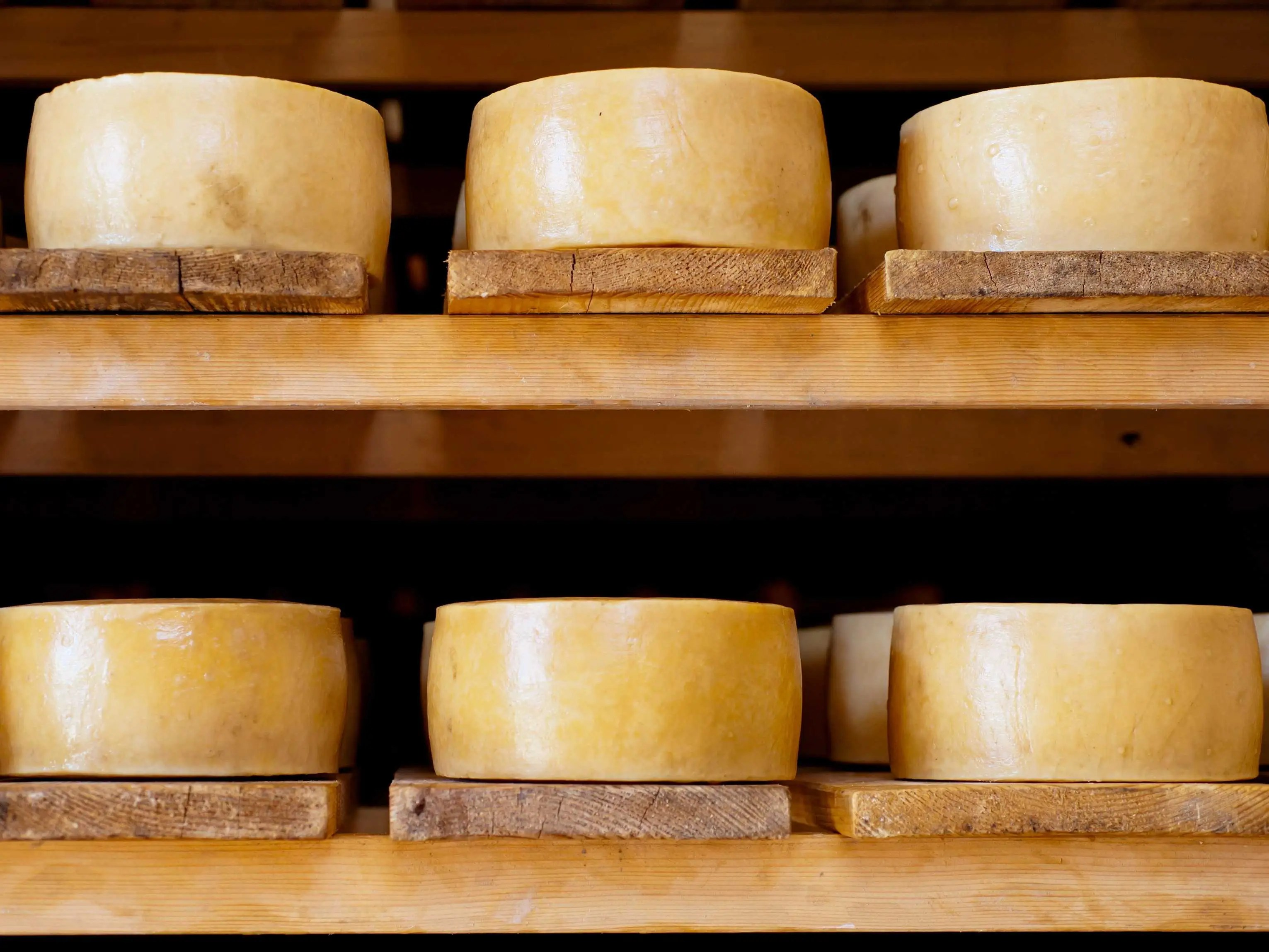 Sample Paški sir, the famous artisanal sheep milk cheese made on the Croatian island of Pag.