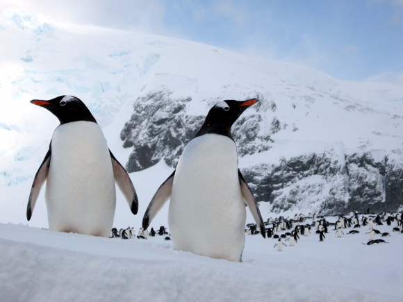 'What would you do if you found a penguin in the freezer?' —Trader Joe's job candidate
