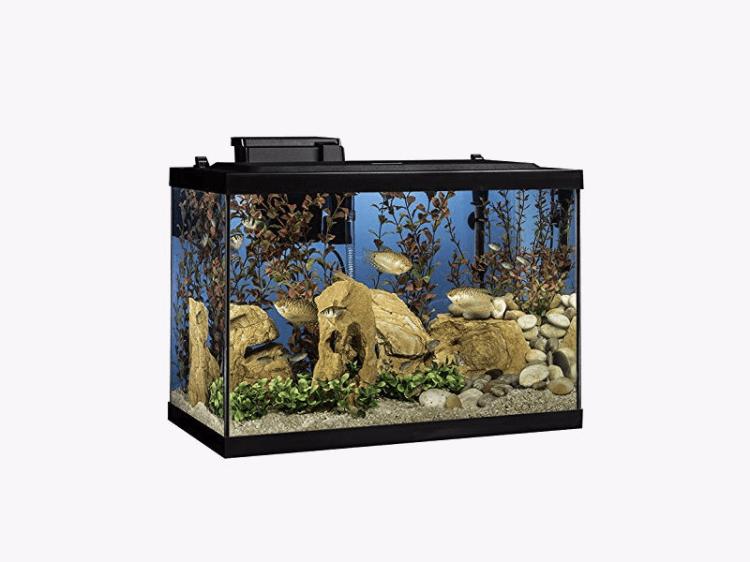 The best 20-gallon fish tank