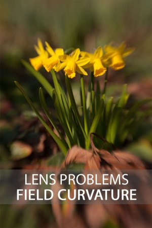 Lens Problems – Field Curvature   Discover Digital Photography