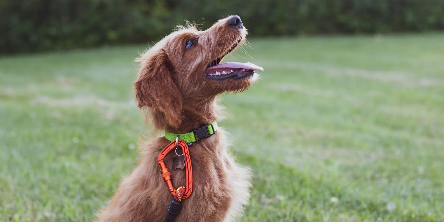 The 5 Best Dog Training Apps for Android and iPhone