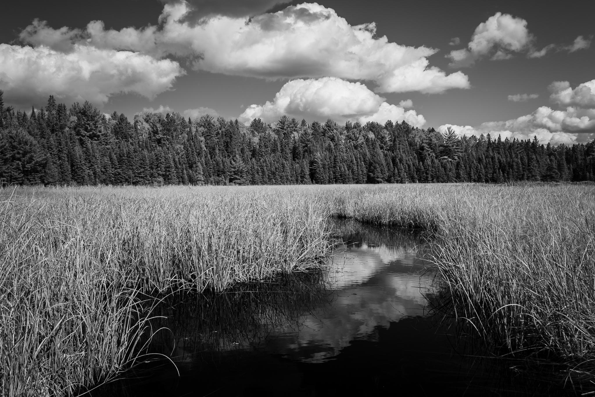 Beaver Pond Creek (1/125s, f/8, ISO100)