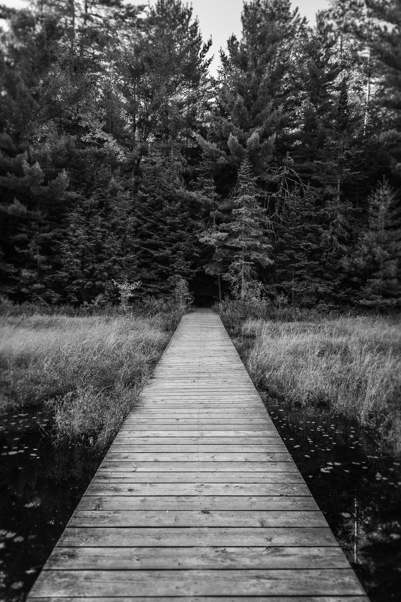 Boardwalk on Peck Lake (1/40s, f/4, ISO400)