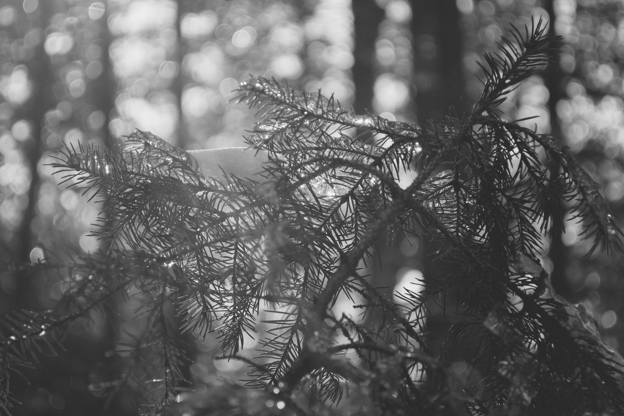 Branch in Sunlight (1/125s, f/5.6, ISO400)
