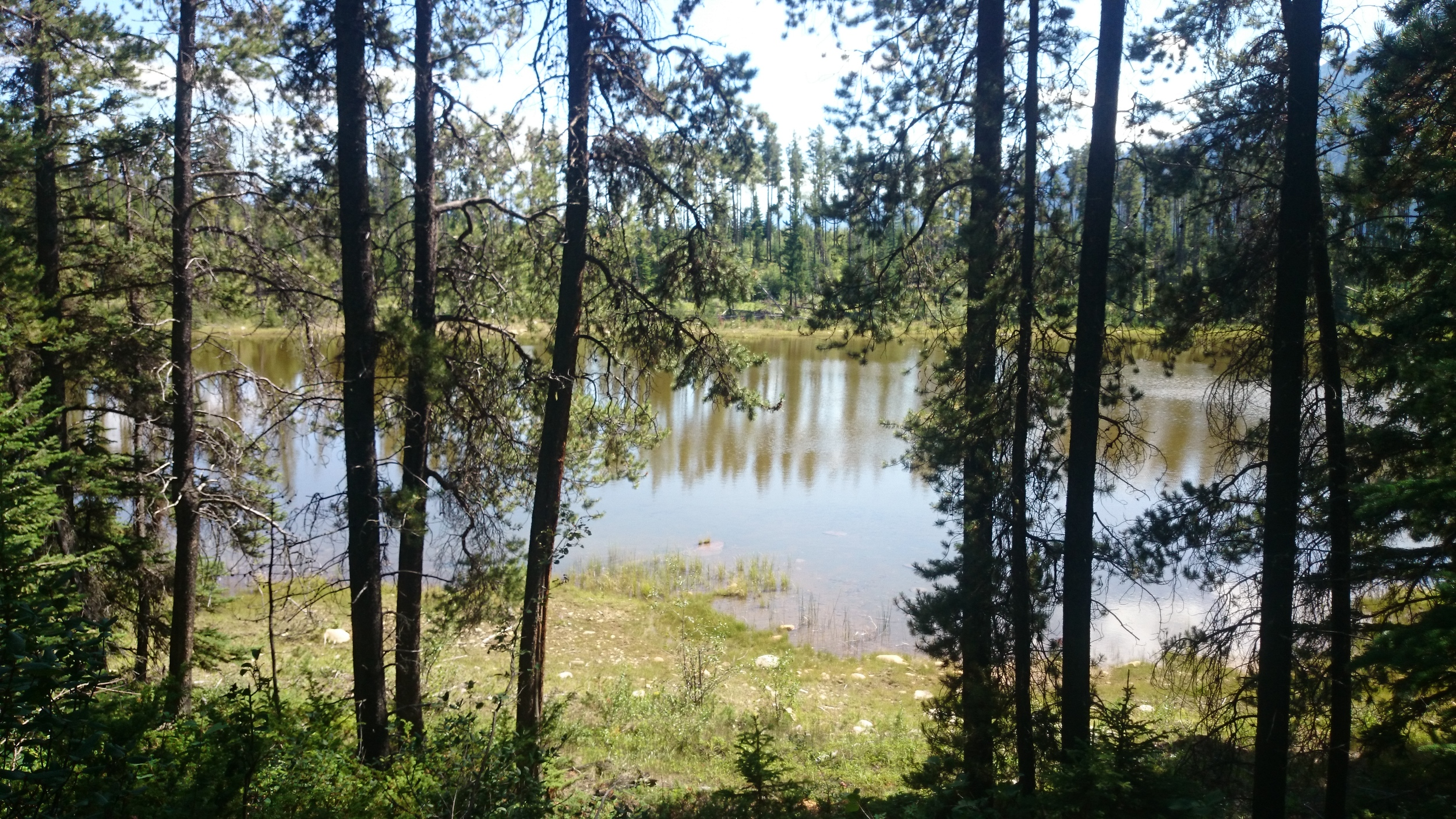 Cabin Lake road view, Jasper National Park
