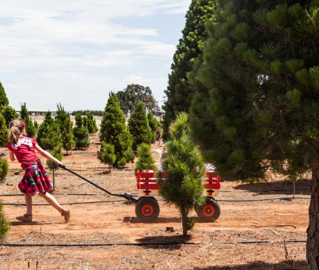 Melbourne Christmas Tree Farm Mamma Knows West