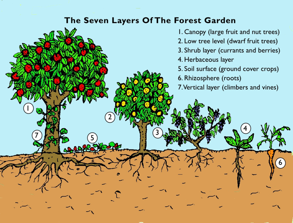 Food Forest Gardening - Regenerative Designs Australia ... on Backyard Permaculture Design id=54451