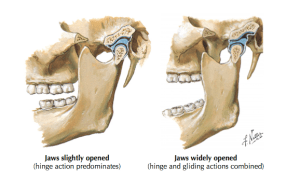Temporomandibular Joint Disorders  Clinical Anatomy & Assessment — Rayner & Smale