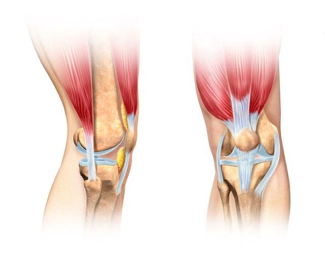 knee-joint.jpg