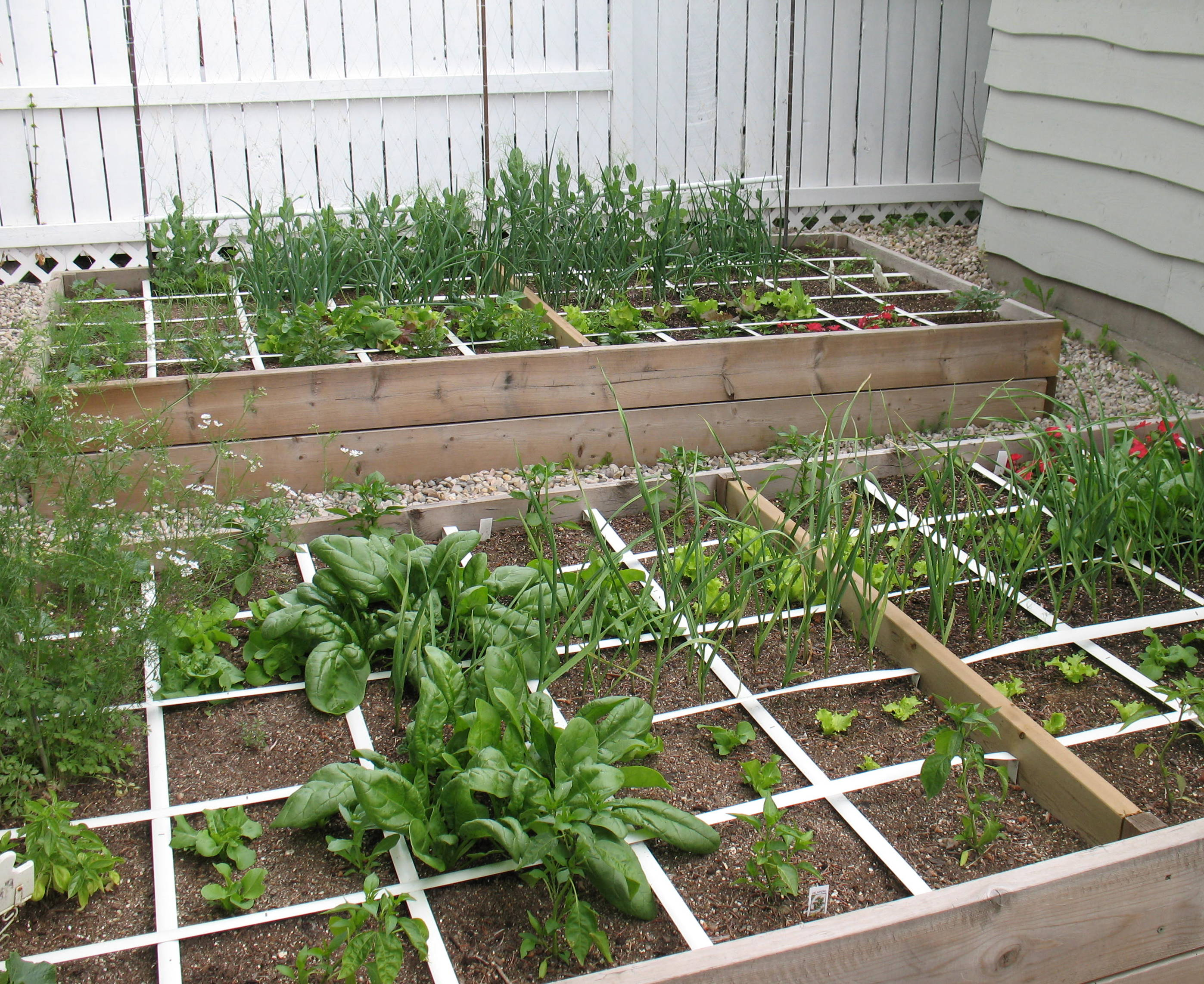 Cheap Raised Vegetable Garden