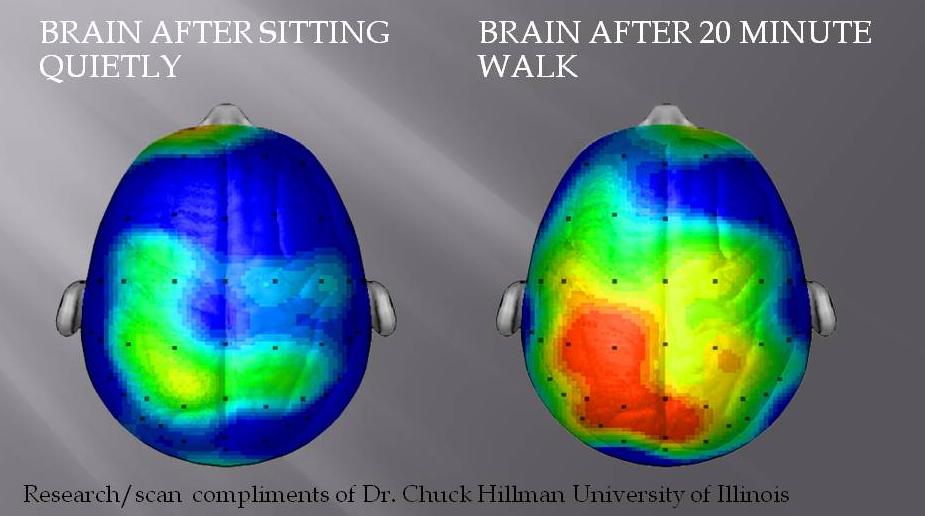 Brain after sitting quietly | Brain after 20 minute walk. Walking is meditative. Steve Jobs just knew.