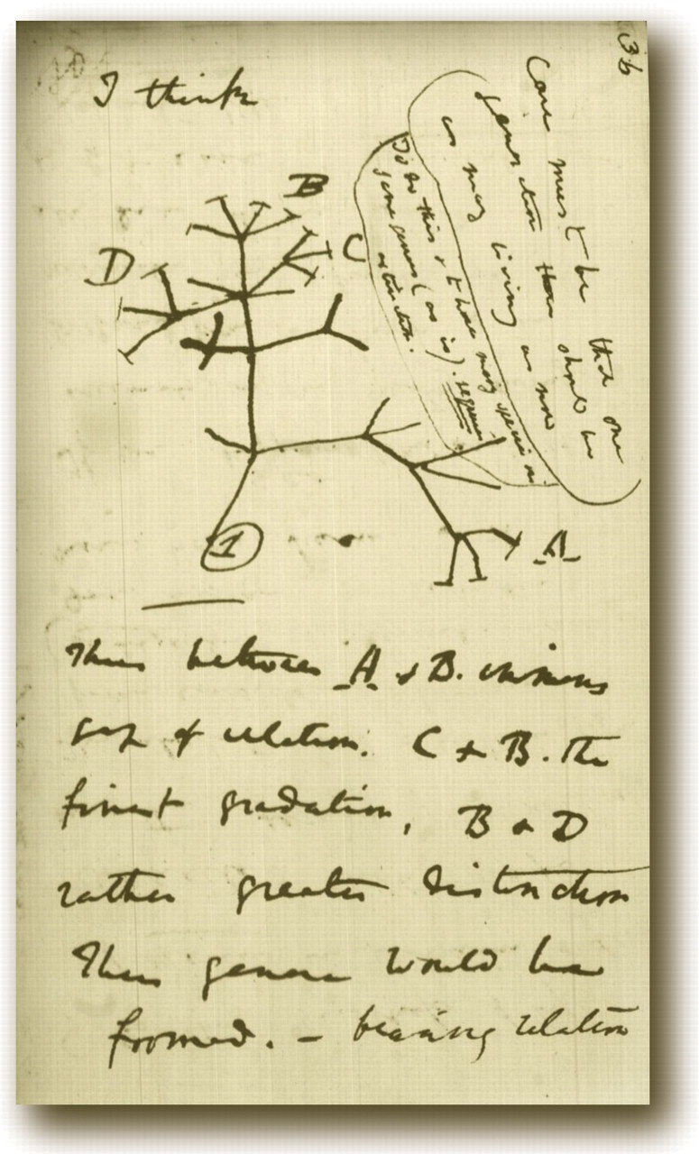 """Darwin's 1837 diagram of an evolutionary treestarts with """"I think…"""" All it takes is a hunch, a guess, and the will to prove it true."""