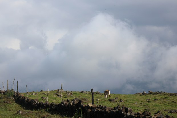 fences, cloudscapes and cow dung!
