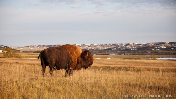 Northern Great Plains — Neil Losin Photography