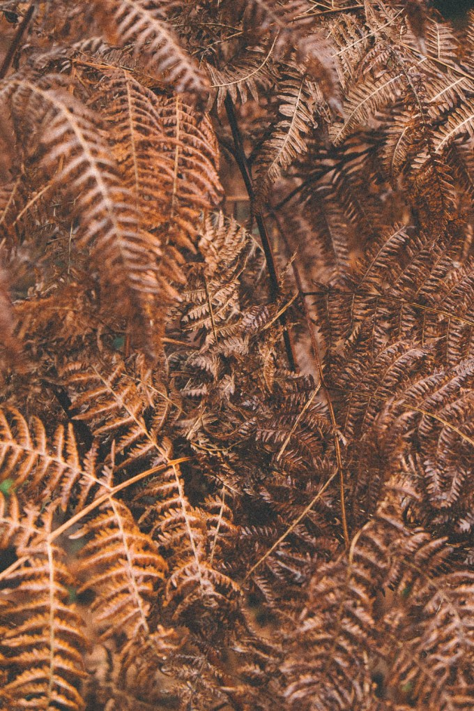 Rusty coloured ferns