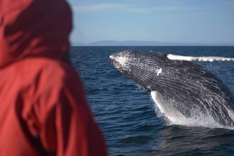 Ljósmynd: Whale Safari