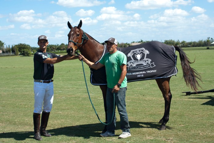 Club Best Playing Pony, Chukker, owned.JPG