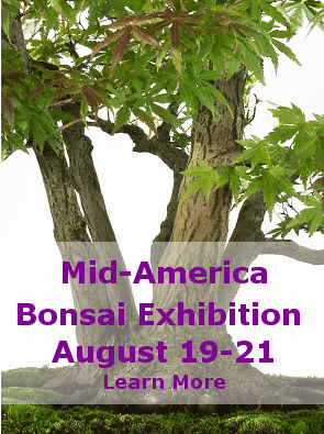 Mid-America August Bonsai Exhibition - August 19-21