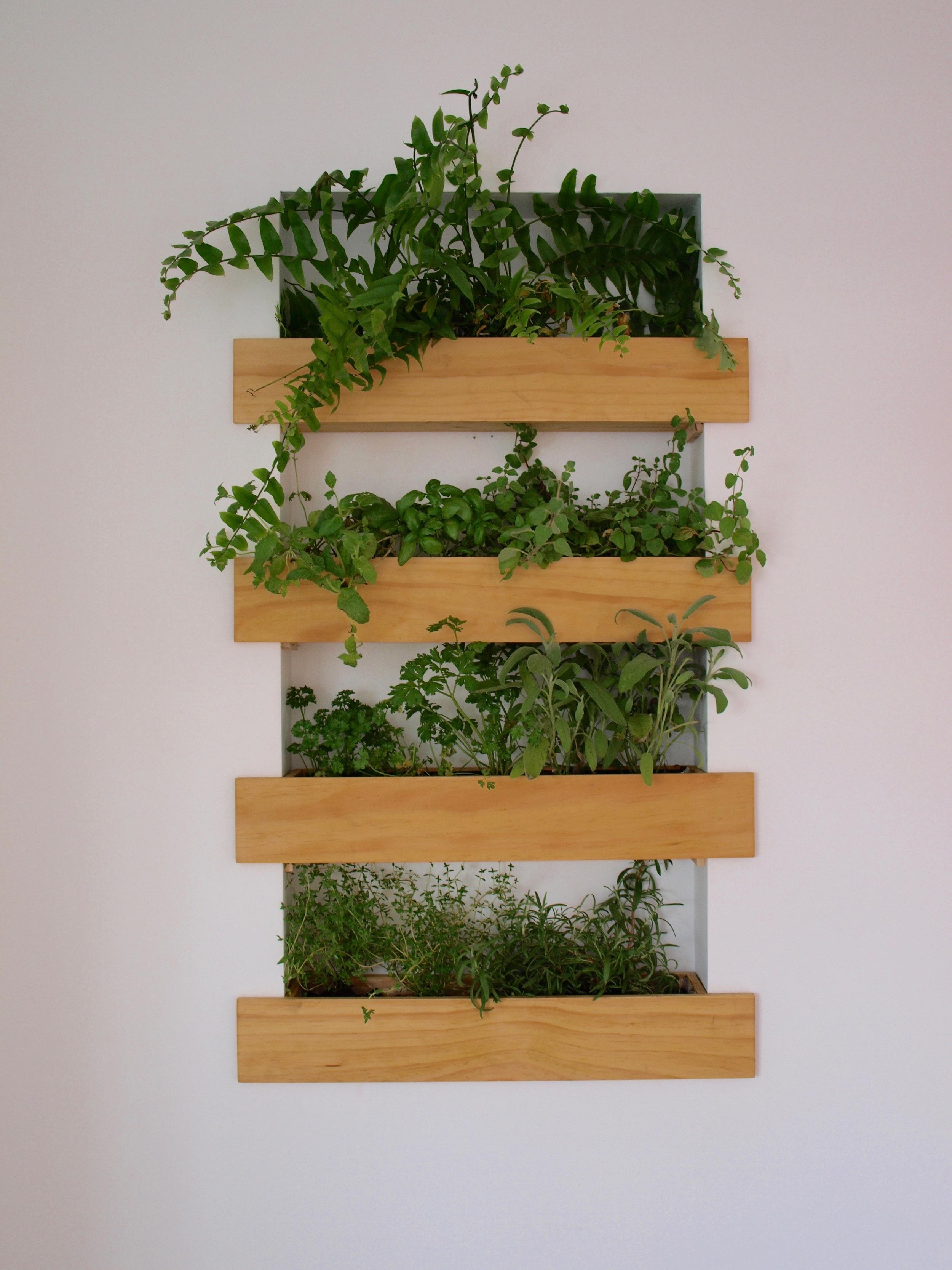 Hanging Room Plants