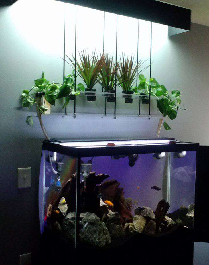 10 Awesome DIY Aquaponic Builds To Inspire You Desima