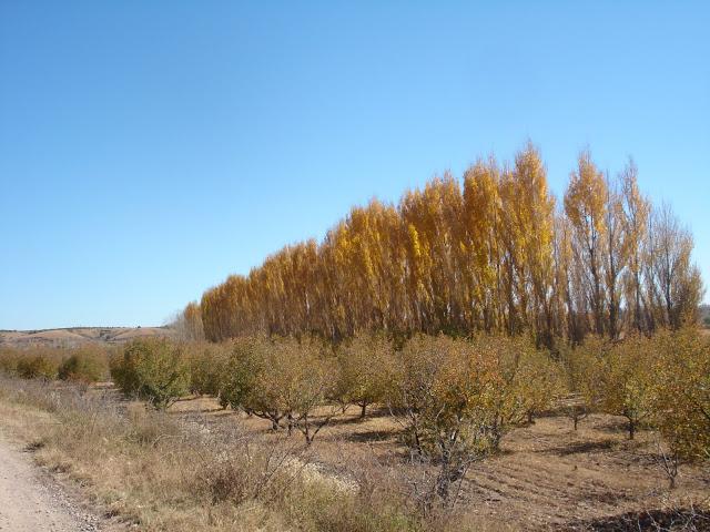 Valle Del Papigochi/Ciudad Guerrero Chihuahua